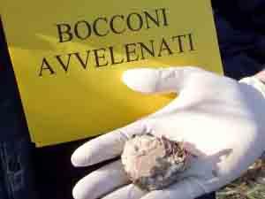 Bocconi-avvelenati